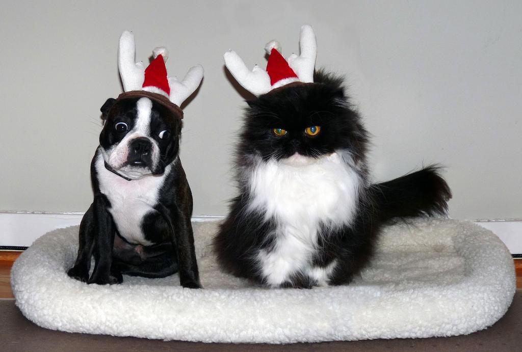 Schlechte Weihnachtsgeschenke für Vierbeiner