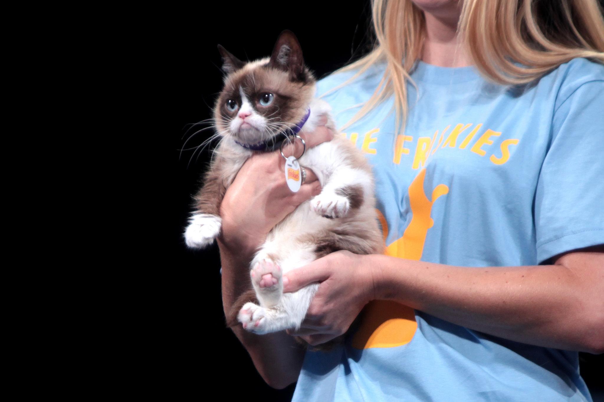 Nervende Katzen wie Grumpy Cat