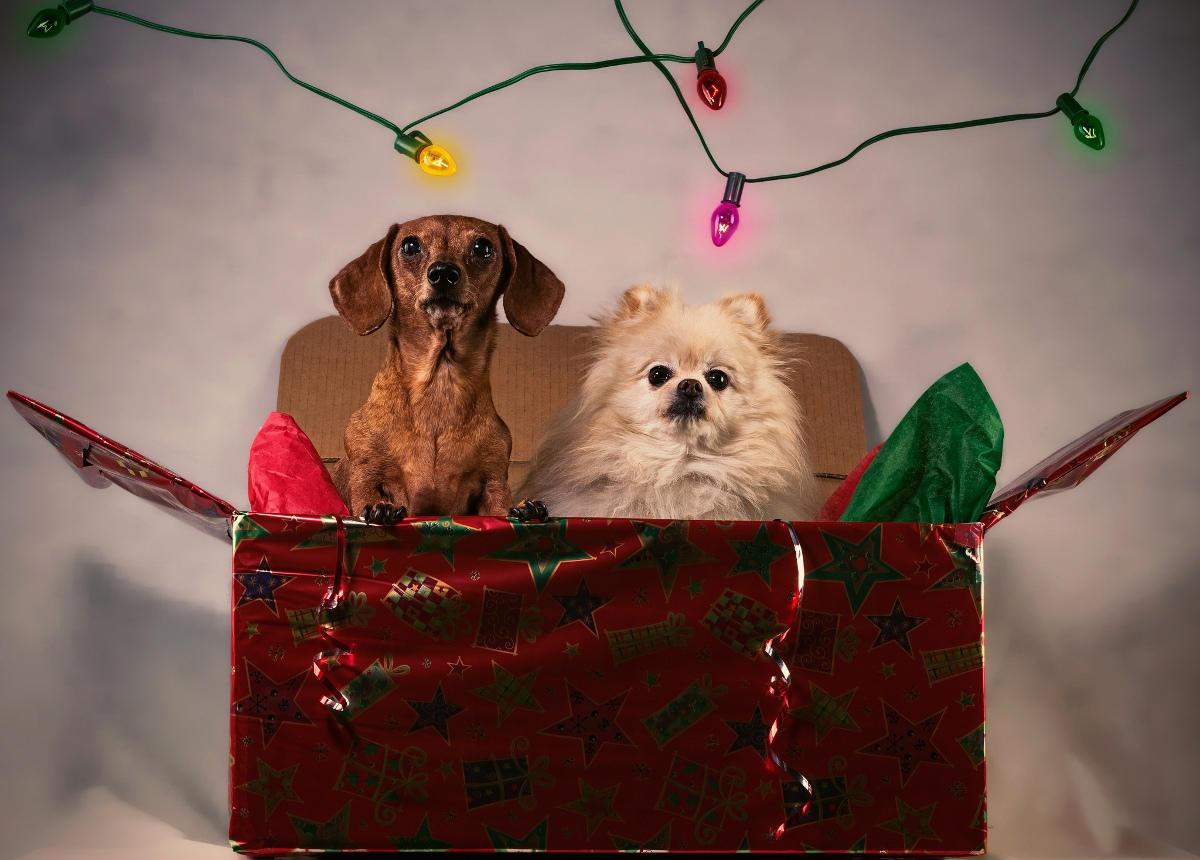 Beitragsbild: Momente, die Du nur zu Weihnachten erlebst