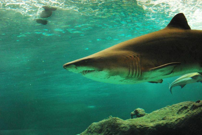 Beitragsbild: Sei der Guppy im Haifischbecken