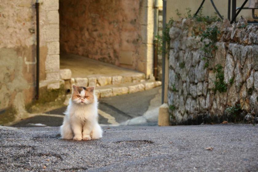 Beitragsbild: Test: Bist Du ein Katzenexperte?
