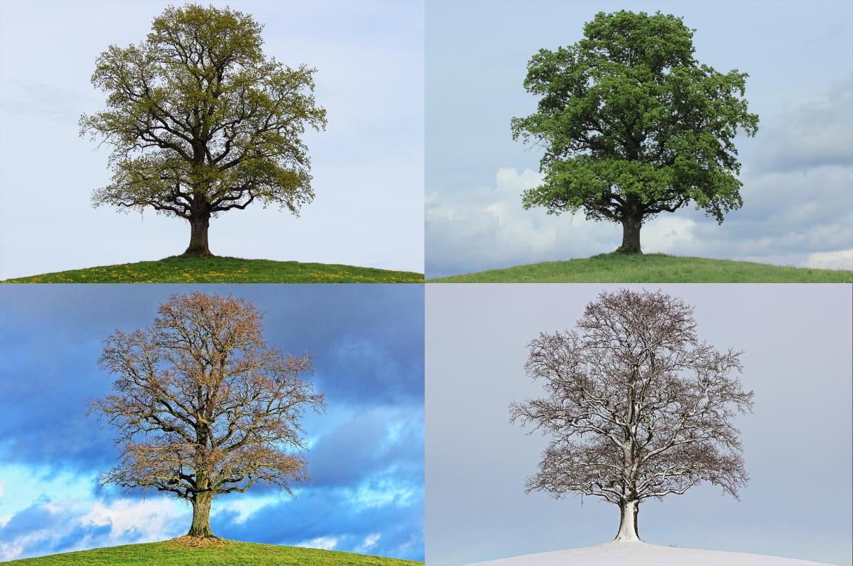 Beitragsbild: Die vier Jahreszeiten im Alltag – eine Hassliebe
