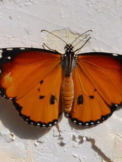 Beitragsbild: Sag doch einfach »Schmetterling« statt »Scheiße«